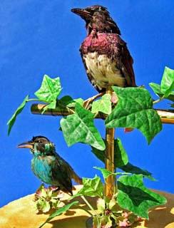 Blechspielzeug Vogel Gutes Renommee Auf Der Ganzen Welt Figuren
