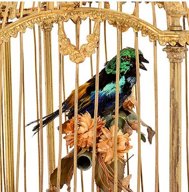 singvögel für käfig